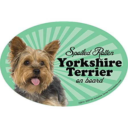 Amazon Com Prismatix Decal Yorkie Car Magnets Spoiled Rotten Yorkie Oval 6 X 4 Auto Truck Refrigerator Mailbox Funny Car Decals Dog Magnet Yorkshire Terrier Automotive