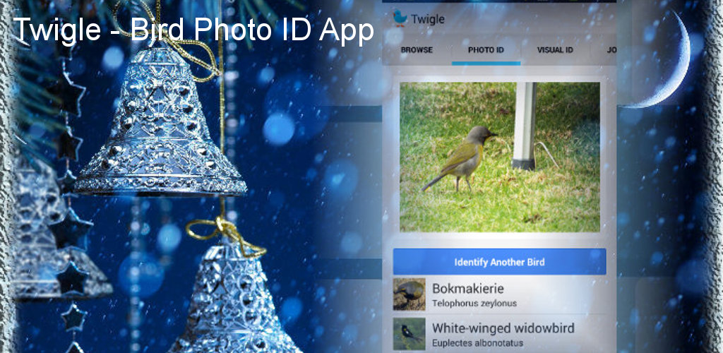 Twigle Birds  Field Guide with Bird Photo ID