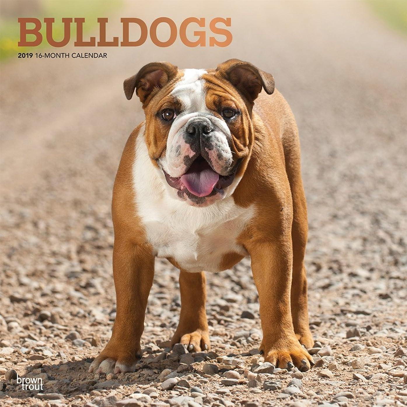 おラビリンスつかむBulldogs 2019 Calendar