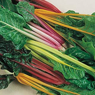 SILVERBEET Rainbow Mix 50 Seed Spring Summer Autumn Winter Vegetable Swiss Chard