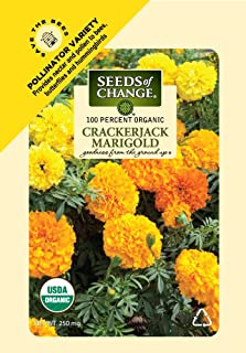 organic marigold plants