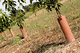Amazon.es: protector arboles tronco