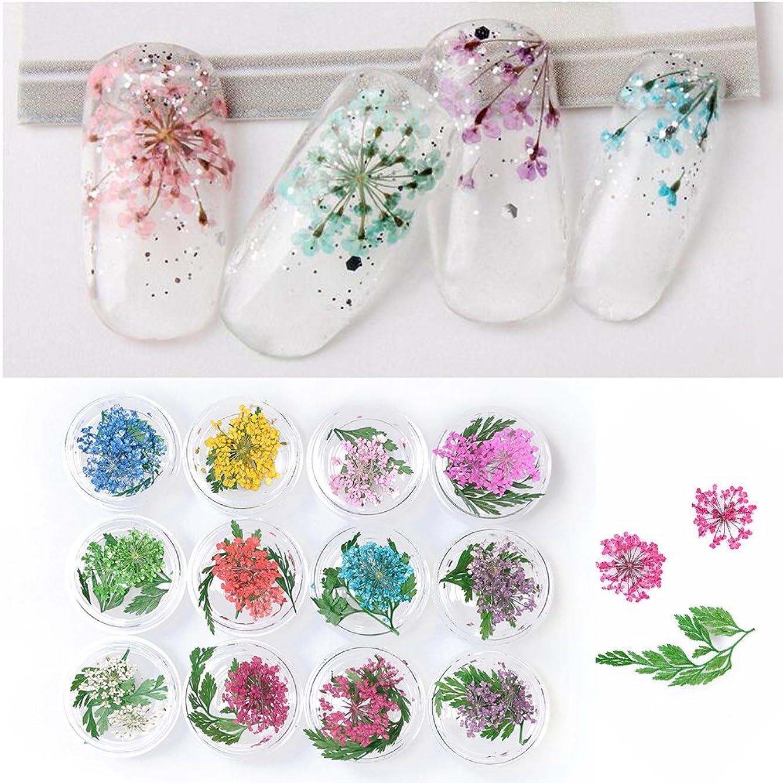 浸透するロゴアルネTakarafune 押し花 ドライフラワー 葉 3Dネイル レジンデコレーション DIY ネイルパーツ 明収納ケース 12色