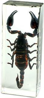 REALBUG Black Scorpion Paperweight (4.4x1.6x1.1)