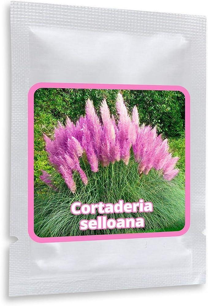 452 opinioni per Piuma della pampa (Cortaderia selloana), circa 150 semi, decorativa