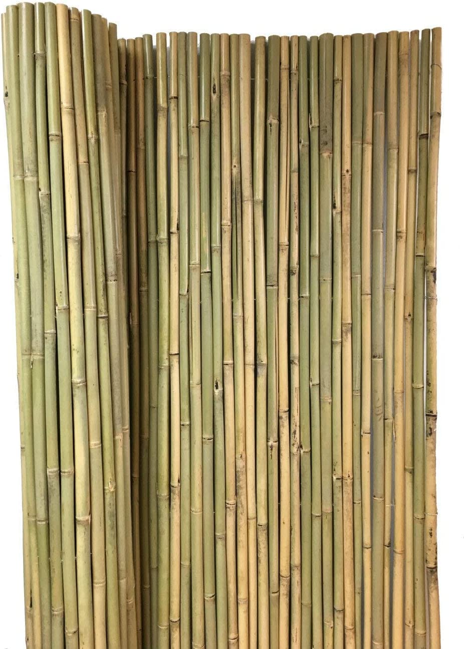 Max 84% OFF MGP Tonkin Outlet sale feature Bamboo Fence 6'L x 4'H