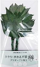 プリザーブド 榊 水が不要で枯れない本物の最高級 サカキ1対