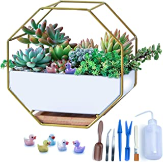 Modern Wall Planter, Metal Wire Octagon Design Wall-Mounted Shelves with Ceramic Flower Pot, Air Plant Container Hanging Vase Desktop Succulents Planter Gold