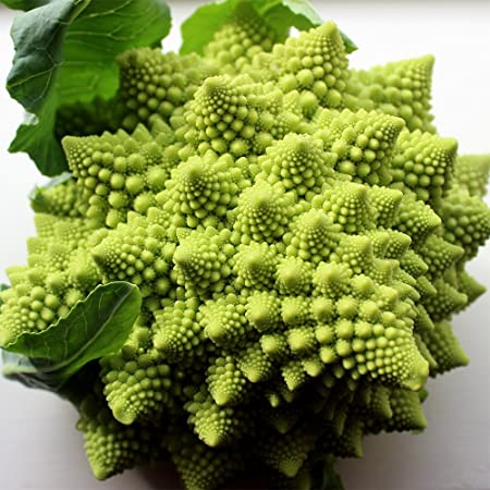 Broccoli Romanesco 50 Seeds per Packet - Rare & Unique