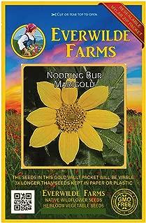Everwilde Farms - 600 Nodding Bur Marigold Native Wildflower Seeds - Gold Vault Jumbo Seed Packet