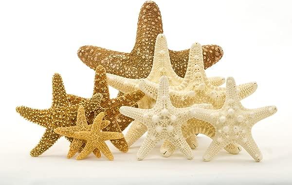Starfish Combo Jungle Knobby Sugar Starfish Variety Pack 9 Starfish Assortment Plus Free Nautical Ebook By Joseph Rains