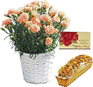 たべるン カーネーション 5号鉢 オレンジ と キャラメルナッツケーキ セット 母の日 カード 花とスイーツ プレゼント フラワー ギフト 贈り物