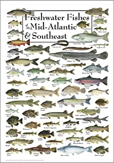 Earth Sky & Water Poster - Freshwater Fishes of the Mid-Atlantic & Southeast