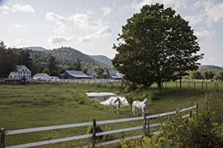 Photograph - White horses on a farm near Townshend, Vermont- Fine Art Photo Reporduction 66in x 44in