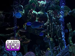 Aquarium Screensaver Art4HD Video Art Volume 3