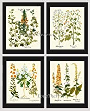Wildflower Print Set of 4 Prints Antique Art Beautiful Caper Bush Spiny Restharrow Mayweed Snowflakes Moth Mullein White Blue Green Orange Ivory Background Home Room Wall Decor Unframed