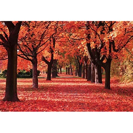 LYLYCTY 5x7ft Autumn Backdrop Nature Landscape Valley Woods Red Leaves Photography Background Gender Reveal Party Banner Backdrops LYLS1245