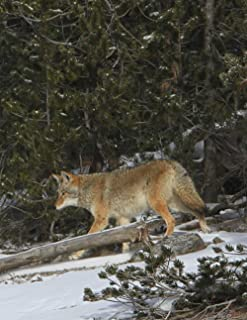 Notebook: coyote wildlife nature park wild canine dogs coyotes dog North America American Native Howl Howling