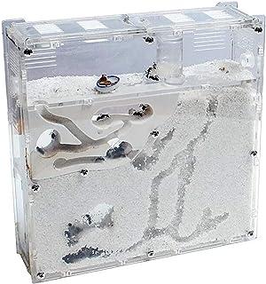 EXDUCT アリの巣観察キット アリ 自由研究 飼育ケース 飼育セット 水槽 砂なし 観察 アリの巣 キット 女王アリ 飼育