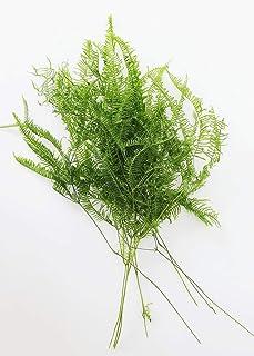 Afloral Natural Dried Fern Leaf Bundle