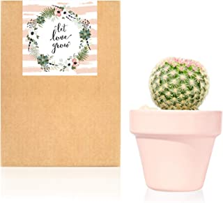 Planta Suculenta o Cactus natural en maceta de cerámica rosa pastel - Planta para regalar entregada en caja de cartón kraft… (Cactus)
