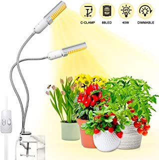 Best lamp with plant inside Reviews