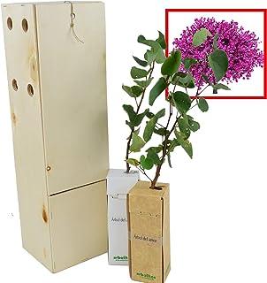 ÁRBOL DEL AMOR de pequeño tamaño en caja de madera. Alveolo forestal (2)