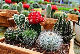 Cacti Mix Seeds Cactus Spiny Plants up to 30 Seeds
