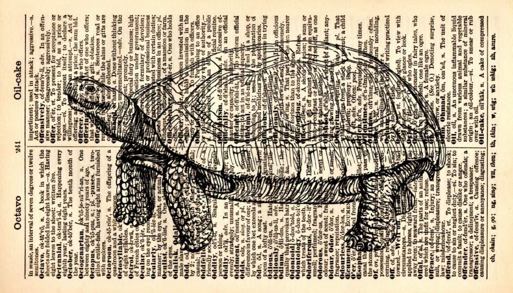 Tortoise Art Print – Illustration Animal Excellent - Surprise price