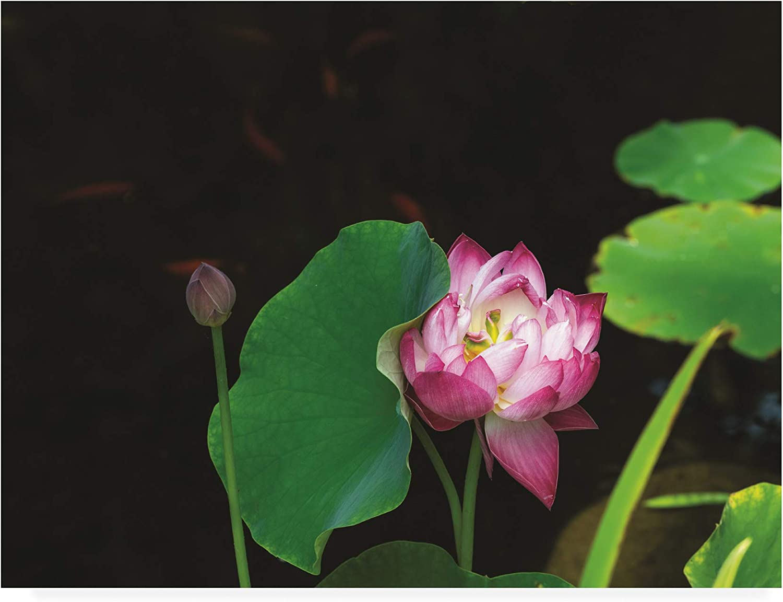 Trademark Fine Art Lotus and Coi