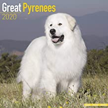 Great Pyrenees Calendar 2020 - Dog Breed Calendar - Wall Calendar 2019-2020