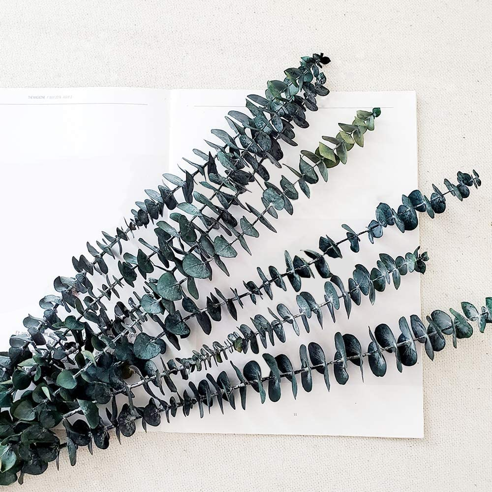 Preserved Fresh Eucalyptus Branches 20inch, 5Pcs Dried Eucalyptus Stems for Flower Arrangements Wedding Home Decor