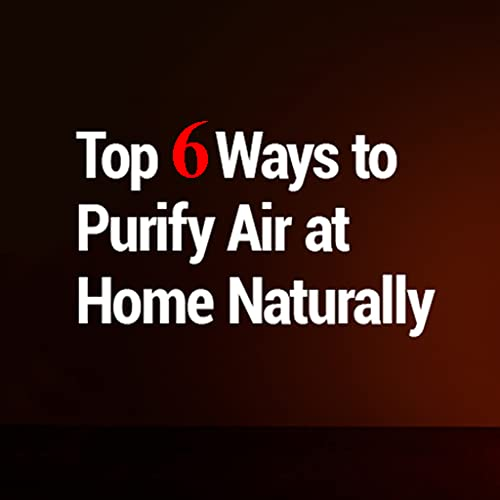 Ways to Purify Air at Home