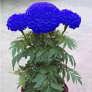 Best live blue flowers Reviews