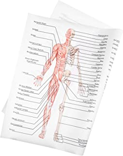 Balacoo Human Being Anatomy Learning Muscular Skeletal System Anatomical Poster Chart Human Skeleton Muscle Anatomy Classr...
