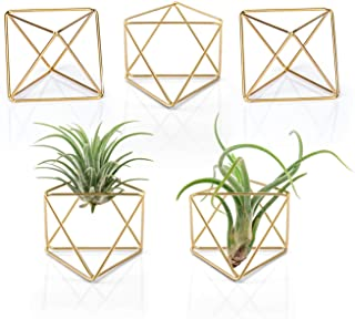 Mkouo 5 Packs Air Plant Holder Modern Geometric Planter Tillandsia Container Metal Air Ferns Display Stand Mini Tablatop Himmeli Decor with Each Side 2.6