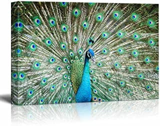Canvas Prints Wall Art - Peacock Showing Its Beautiful Feathers/Spreading Its Tail   Modern Wall Decor/Home Decoration Stretched Gallery Canvas Wrap Giclee Print & Ready to Hang - 32