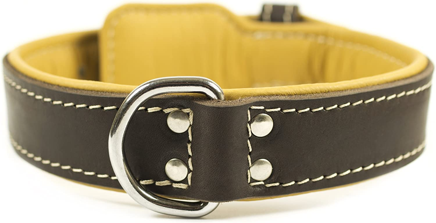 Dean and Tyler ITALIAN TAILOR , Dog Collar with Black Padding and Chrome Plated Steel Hardware  Brown  Size 38  by 13 4   Fits Neck 36  to 40