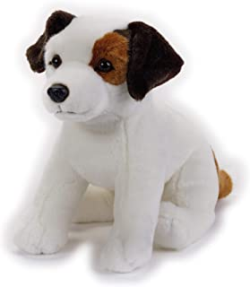 Lelly - National Geographic Jack Russel Terrier, Sitting