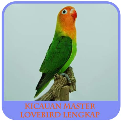 Chirping Vogel-Meister Lovebird