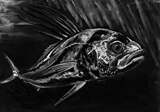 Rooster Fish Drawing, Fishing Wall Art Print, Rooster Fish Charcoal Study, Fisherman Gift, Fishing Drawing, Hand Signed By Jack Tarpon,Rooseter Fish Artwork