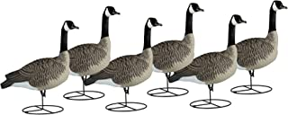 Dakota Decoy 19700 Waterfowl Hunting Signature Series Sentry Geese (6 Pack)