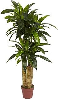 Nearly Natural 6648 Corn Stalk Dracaena Decorative Silk Plant, 4-Feet, Green (Renewed)