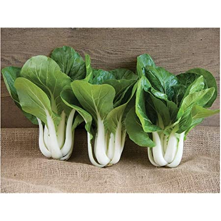 200pcs Brassica chinensis Seeds organic fast-growing Chinese cabbage