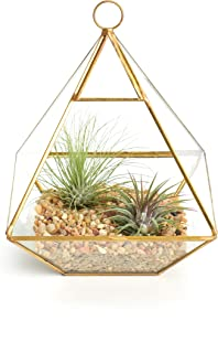 Shop Succulents Geometric Terrarium Kit | Live Air Plants...