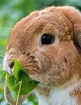 Notebook: rabbit hare european rodent cottontail bunny raccoon squirrel bunny bunnies rabbits