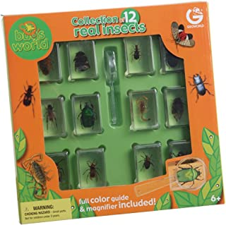 Constructive Playthings Geoworld Bugs World Collection, 12 Real Insects, Scientific Educational Toy