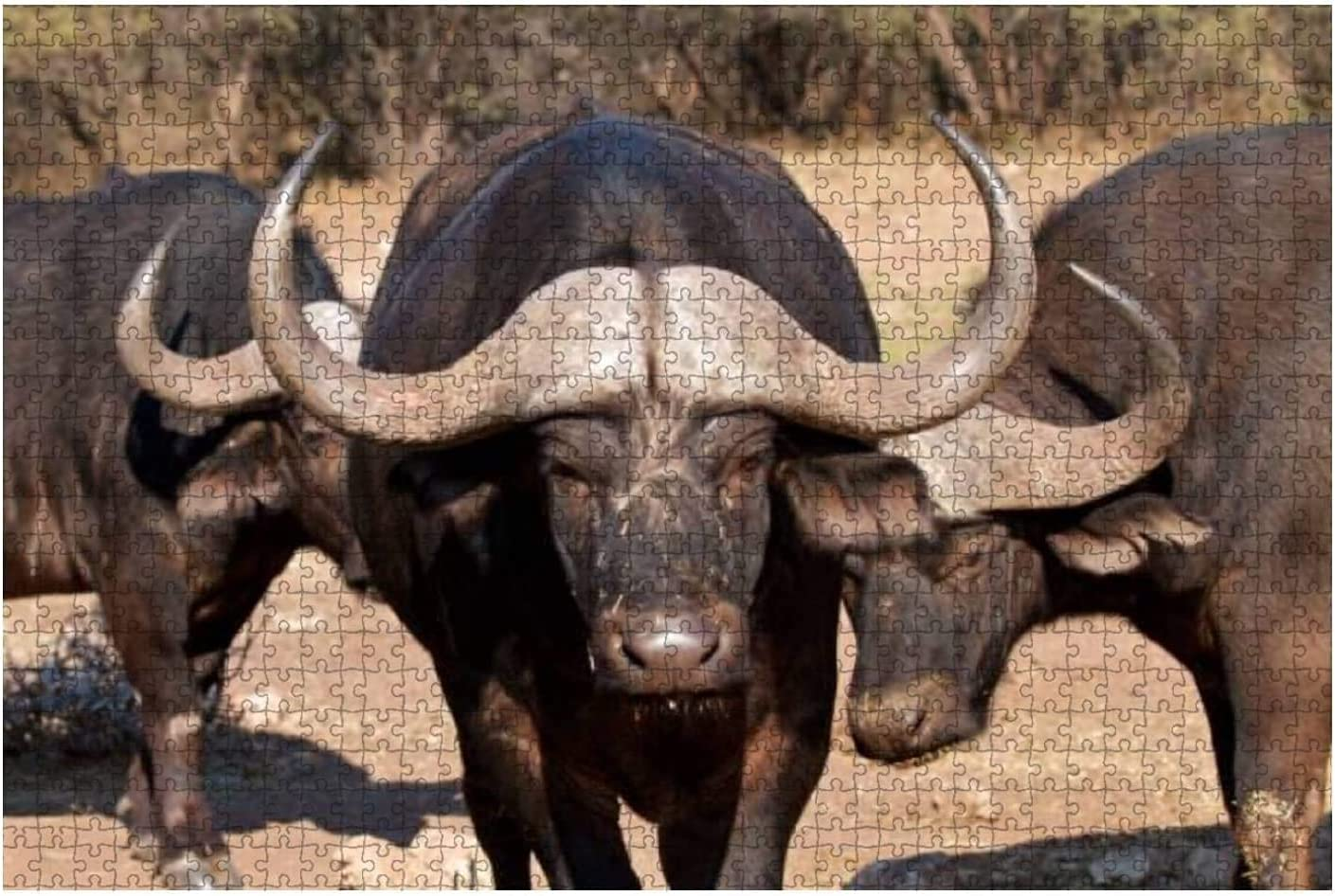 1000 Pieces-Cape Buffalo Walking Toward up Front Camera NEW before selling ☆ Vi Super popular specialty store Close