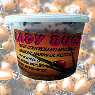 order praying mantis eggs online