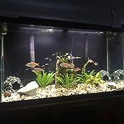 Etmury Luz subacu/ática IP68 2 unidades para piscina//estanque//ba/ño//ba/ñera//fuente//acuario//jarr/ón base resistente al agua 16 RGB cambio de color iluminaci/ón LED para acuario con mando a distancia